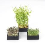 plastove_zahradky1