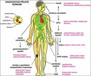 ochorenia spôsobené nanočasticami